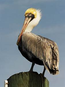 Hilton Head Nature Tours | Nature Viewing and Wildlife ...