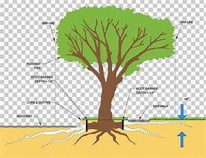 Tree Trunk Stem Diagram