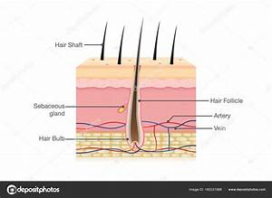 Hair Follicle In Polygonal Wireframe Style