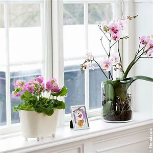 Fensterbank Dekorieren Modern : einfache dekoration fensterbank 2015 fensterbank deko ~ Watch28wear.com Haus und Dekorationen