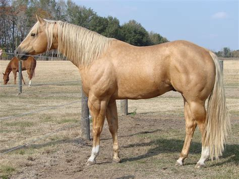quarter horses - Recherche Google   Cowboy & Indianer ...