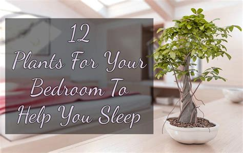 Best Plants For Bedroom by 12 Plants For Your Bedroom To Help You Sleep