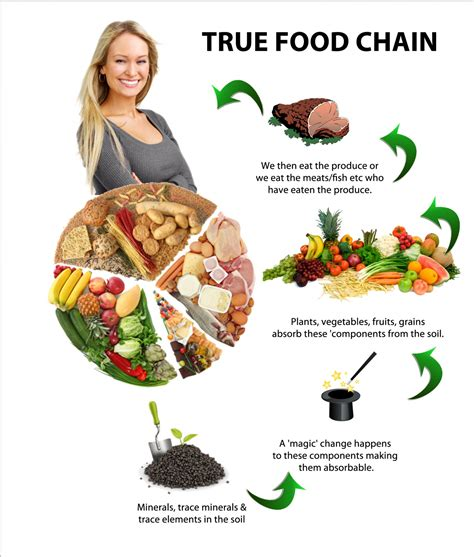 web cuisine food chain food web parasite chain predator chain