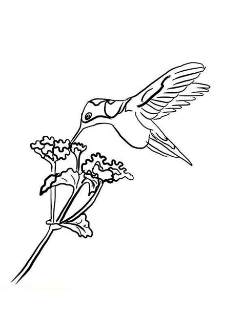 black chinned hummingbird eat nectar  hummingbird coloring page kids play color