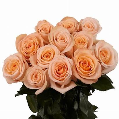 Roses Dozen Peach Delivery Valentine Globalrose Rose