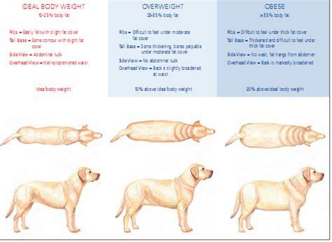 fat dogs  dog   blog