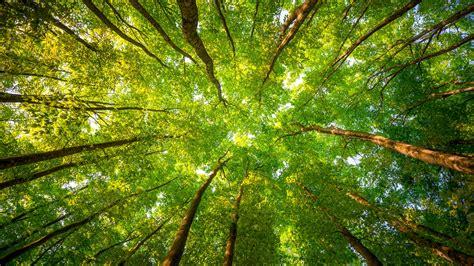 Wallpaper Trees, 5k, 4k Wallpaper, 8k, Sunlight, Leaves