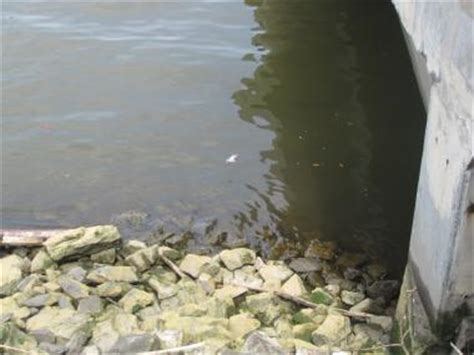Raw Sewage In Hudson A 'continuous Problem,' Experts Say. Graduate Degree Program In Ecology. Home Remedies For Runny Nose. Long Island University Mba Sftp Transfer File. Environmental Database Software