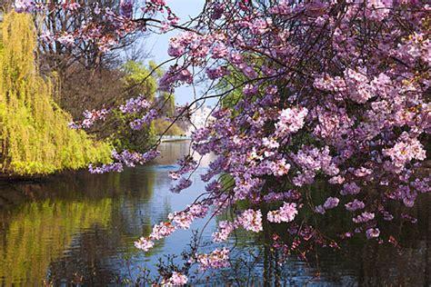 photograph  springtime st james park london
