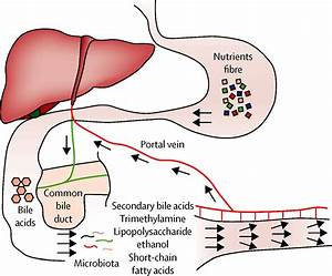 The intestinal microbiome and paediatric liver disease ...