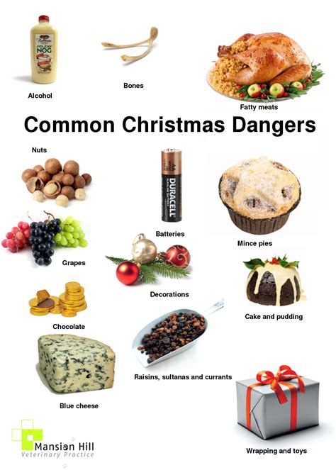 handy guide  christmas poisons dangers  irritants