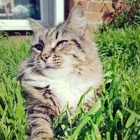 vitamin  modern cat