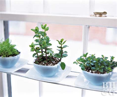 Best Indoor Window Sill Plants by Windowsill Gardens Better Homes Gardens