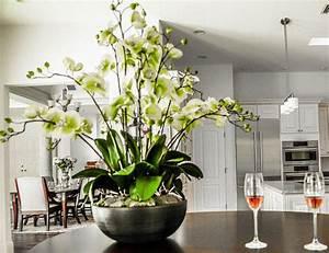 images gratuites blanc fleur eclairage plante d With chambre bébé design avec fleurs fleuriste