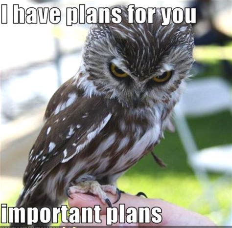 Funny Bird Memes - 21 best funny birds pictures