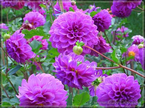 TOPnatural: ดอกไม้