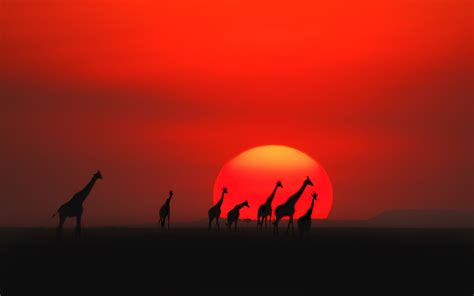 blood moon africa the top 20 spots to the sunset