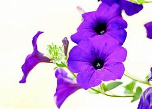 Purple Flowers On Light Background by Edward Myers