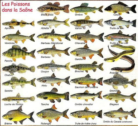 les poissons de l aquarium 10 poissons