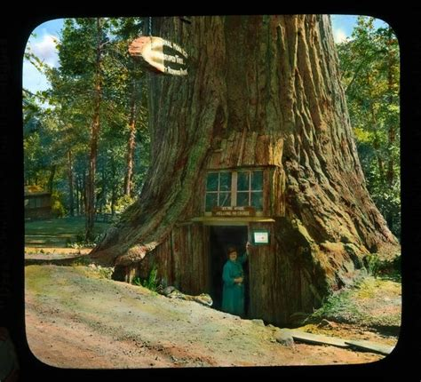 tree house hotel redwood forest 1000 images about casas curiosas on pinterest tree houses treehouse and hobbit houses