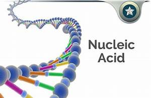 Nucleic Acid Review