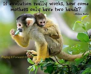Monkey Animal Q... Cute Lemur Quotes