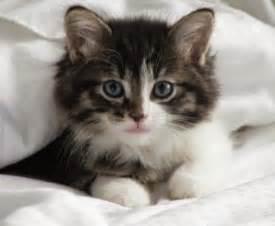 cool cat names unique cat names driverlayer search engine