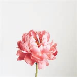 best 25 peonies ideas on pink peonies peony