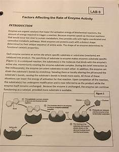Solved  Lab 8 Factors Affecting The Rate Of Enzyme Activit