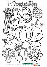 Colouring Activities Vegetables Children Both Holiday Under Which There Colouriing sketch template