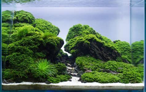 aquascape how to aquascape edge by frederic fuss germany this