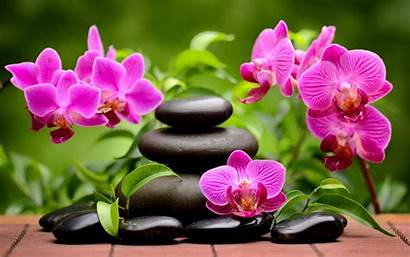 Spa Orchids Wallpaperaccess Wallpapers Backgrounds