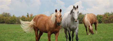 ranch ride