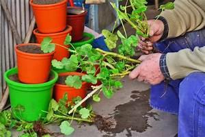 Plant Propagation By Stem Cutting