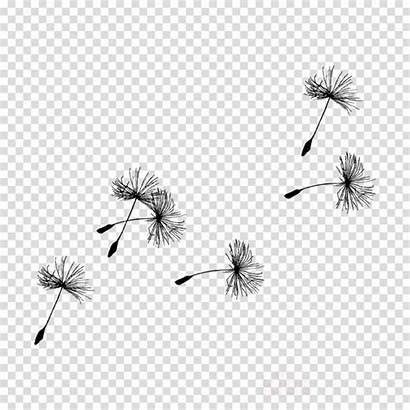 Dandelion Silhouette Clipart Clip Flower Photoshop Transparent