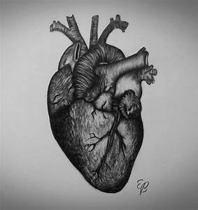 Drawing Of A Real Heart - DRAWING ART IDEAS