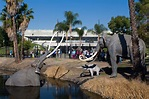 An updated look is on the horizon for the La Brea Tar Pits ...