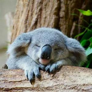 sleeping koala | Alex O´Loughlin ~ An Intense Study