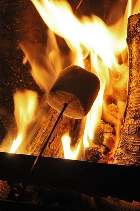 roasting marshmallows pictures   images