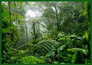 The Tropical Rainforest Slideshow