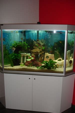 meuble aquarium blanc laque 28 images meuble blanc laqu 233 wave station aquarium et meuble