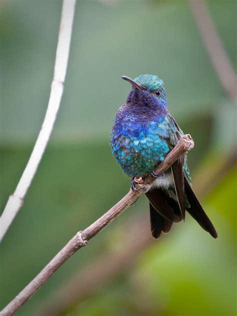 slideshow other panama birds