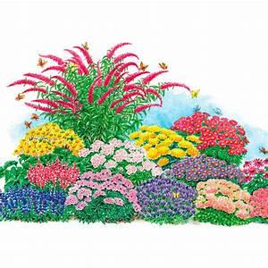 Blumenbeete Zum Nachpflanzen : sortiment schmetterlingsstauden online kaufen bei g rtner p tschke ~ Yasmunasinghe.com Haus und Dekorationen