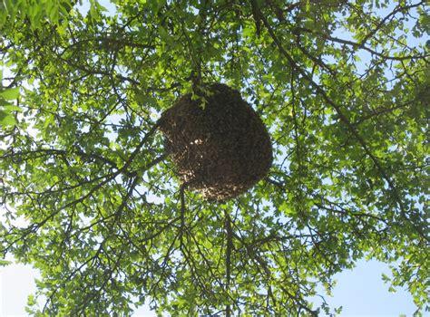 Warum Fliegen Insekten Ins Licht by Werden Spinnen Vom Licht Angezogen Wieso Werden Motten