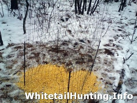Deer Antler Shed Trap by Shed Antler Trap 02 Whitetail