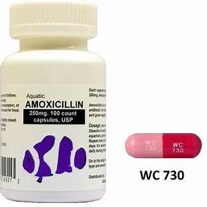 Augmentin 250 mg tablets - Prednisone prednisolone posologie