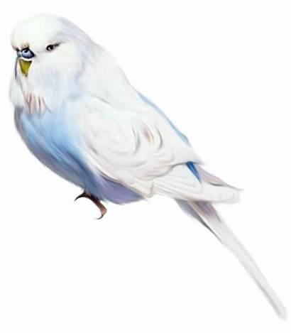 Lukisan Burung Gambar Unik Enggang Cerita Kehidupan