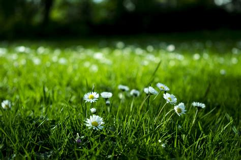 How To Get Rid Of Weeds Without Killing Your Lawn