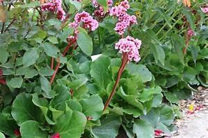 Blühende Stauden Winterhart : immergr ne stauden winterhart wish winterharte balkonpflanzen diese 33 k belpflanzen sind zu ~ Buech-reservation.com Haus und Dekorationen