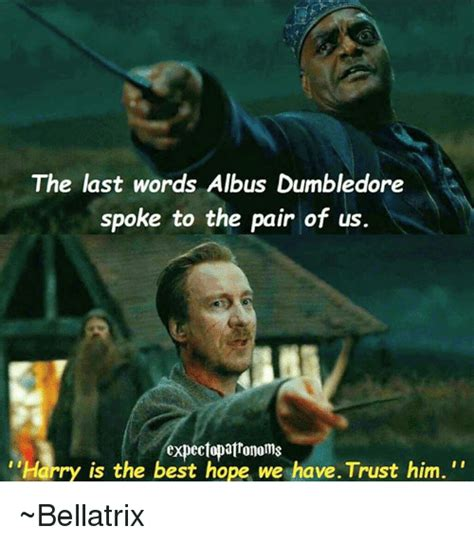 Dumbledore Memes - the last words albus dumbledore spoke to the pair of us harry is the best hope we havetrust him